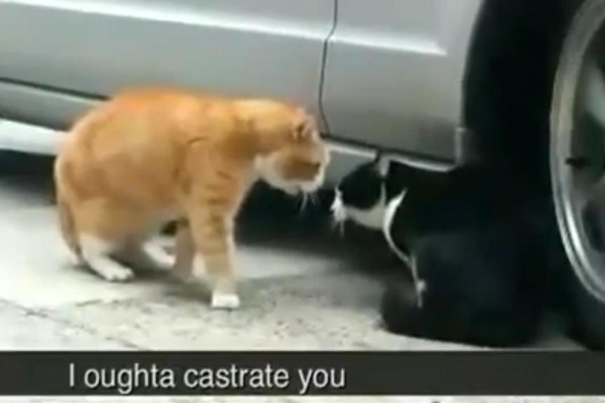 What Is This Cat FussingAbout?